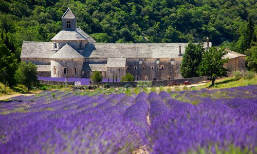 L'Abbazia di Sénanque, un monastero immerso nei campi di lavanda