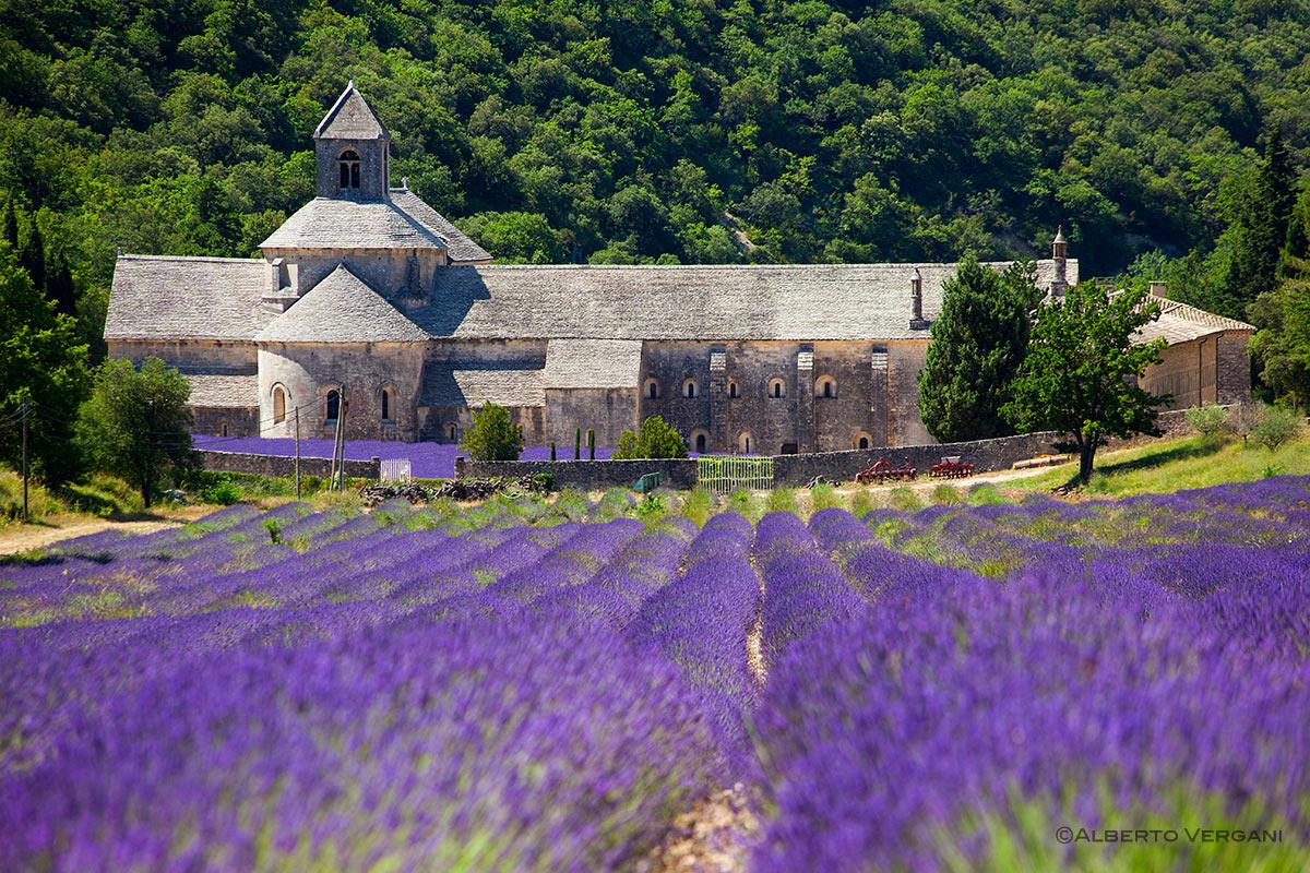 L'Abbazia di Sénanque, un monastero immerso nei campi di lavanda |  Viaggiando nella Bellezza